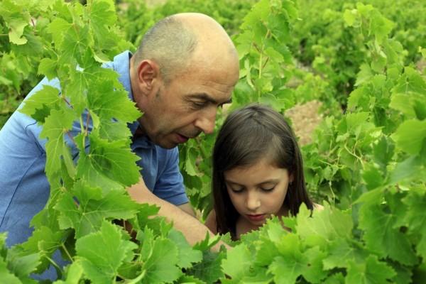 Sylvain Faddat dans son caveau et dans ses vignes. Domaine d'Aupillac, Montpeyroux, Languedoc Roussillon, France