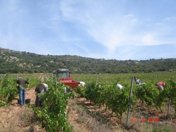 Vendanges-2008-216